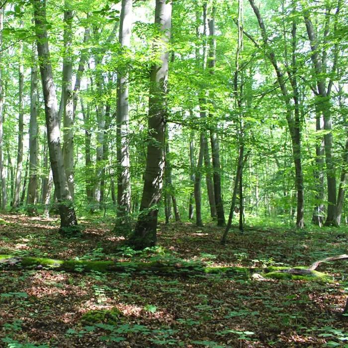 sehenswuerdigkeiten-muehlhausen-Unstrut-Hainich--thueringen-reisetipps-deutschland-unesco-welterbe-nationalpark-hainich
