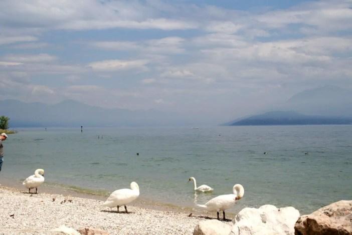 reisetipps-lombardei-reisetipps-italien-rundreise-lombardei-sehenswuerdigkeiten-sirmione-gardasee-schwaene