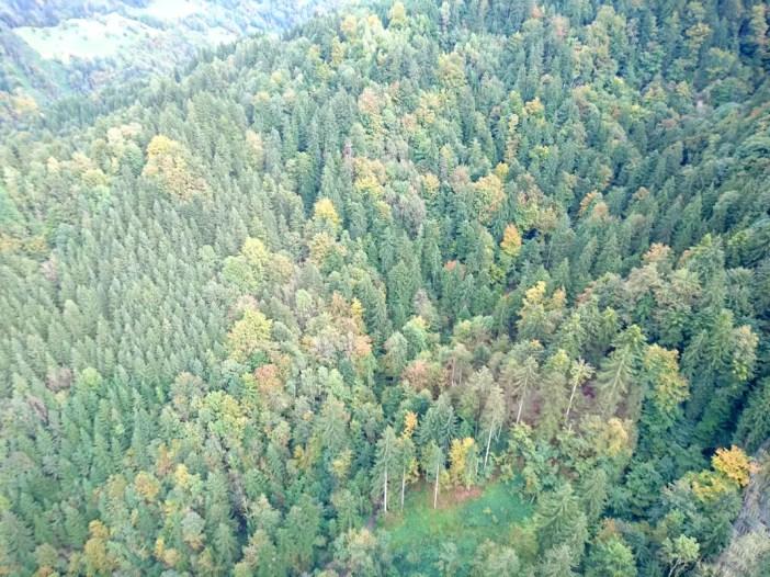 sehenswuerdigkeiten-dornbirn-reisetipps-vorarlberg-reisetipps-oesterreich-karren-seilbahn-wald