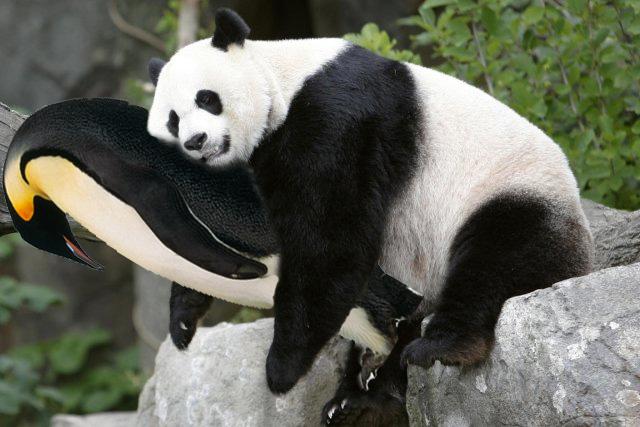 Rappel sur Pingouin et Panda