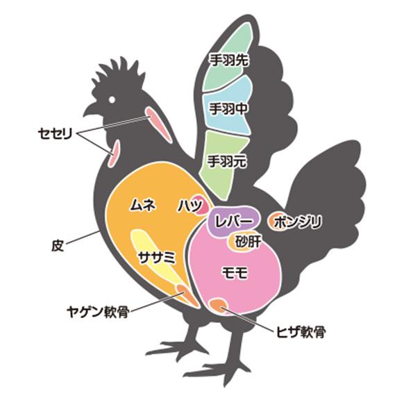 鶏肉-部位-図-大