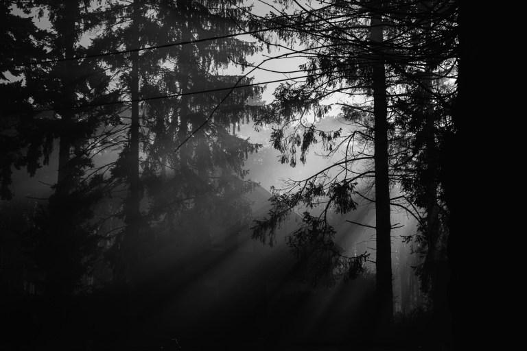 nico van moorhem fotograaf natuurfotografie