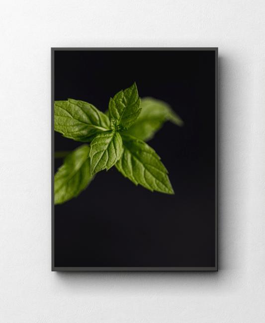 Obraz na ścianę fotografia kulinarna mięta