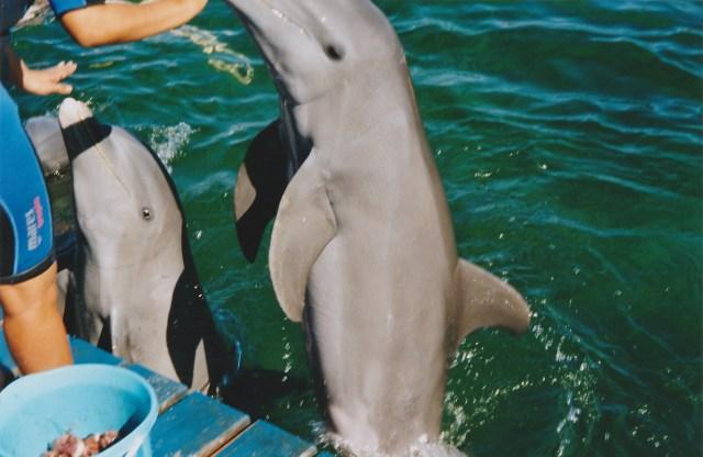 Delfinfütterung