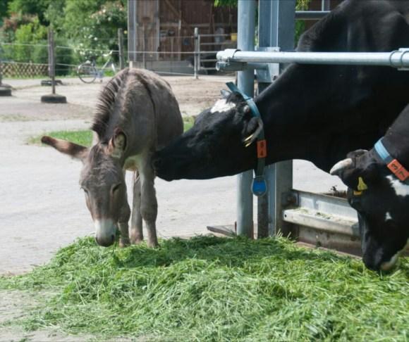 Jahreskurs Bauernhof