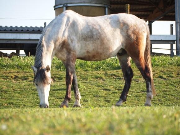 Pony reitpädagogik