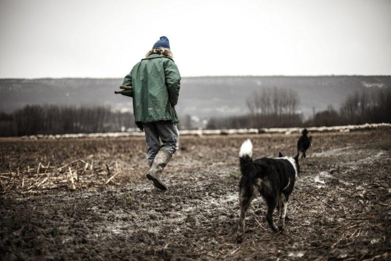 shepherd 438445 1920