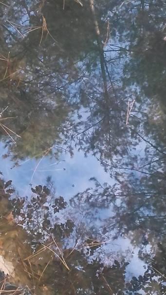 Reflets ciel et arbre