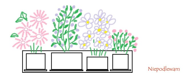 W drewnianej skrzynce doniczki zkwiatami ustawia się osobno, każdą naoddzielnej podstawce. Rys. Niepodlewam