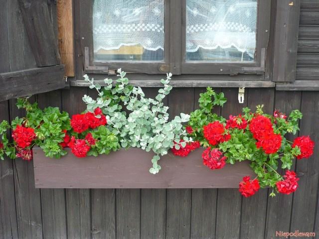 Drewniana skrzynka zkwiatami nazabytkowej Wodopójce wBiałymstoku. Fot.Niepodlewam