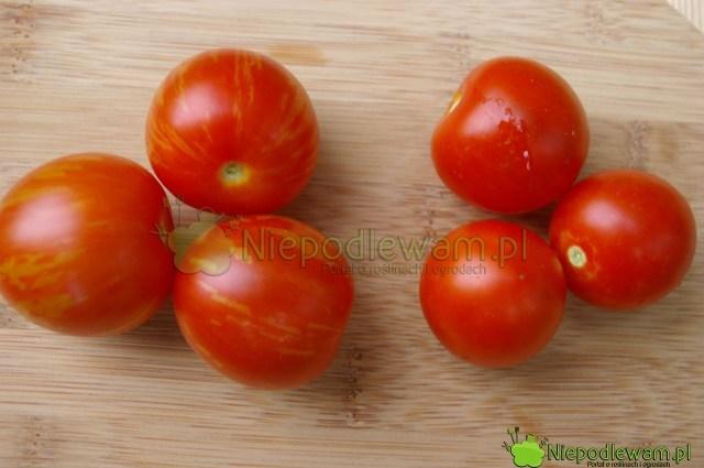 Pomidor Maskotka (poprawej stronie) iTigerella (polewej stronie). Fot.Niepodlewam