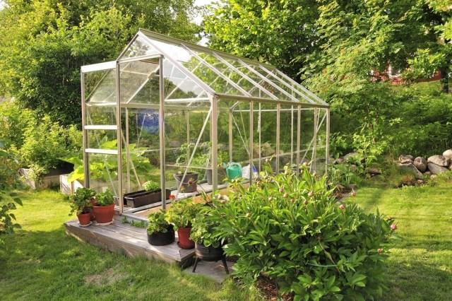 Szklarnię wogrodzie zakłada się wsłonecznym miejscu. Większość warzyw orazfigi, pomarańcze czycytryny potrzebują dużo słońca. Fot.Shutterstock