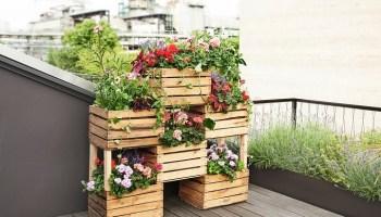 Drewniane Skrzynki Jak Sadzić W Nich Kwiaty