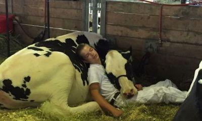 jongen en koe