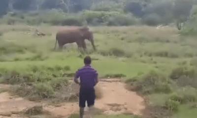 Olifant dood dronken man