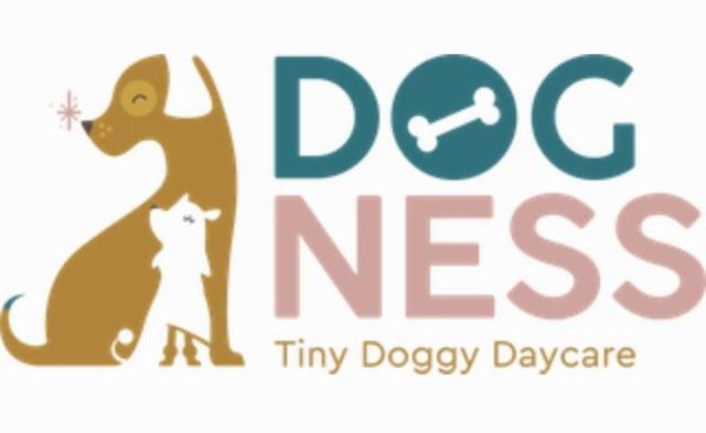 DOG Ness opent haar voordeur