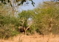 elephant-broadside