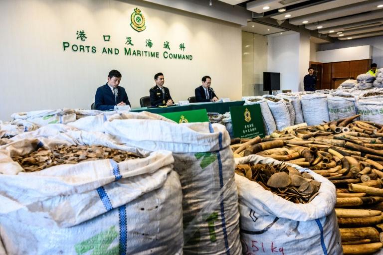 Customs Seizes Six Tonnes of Pangolin Scales