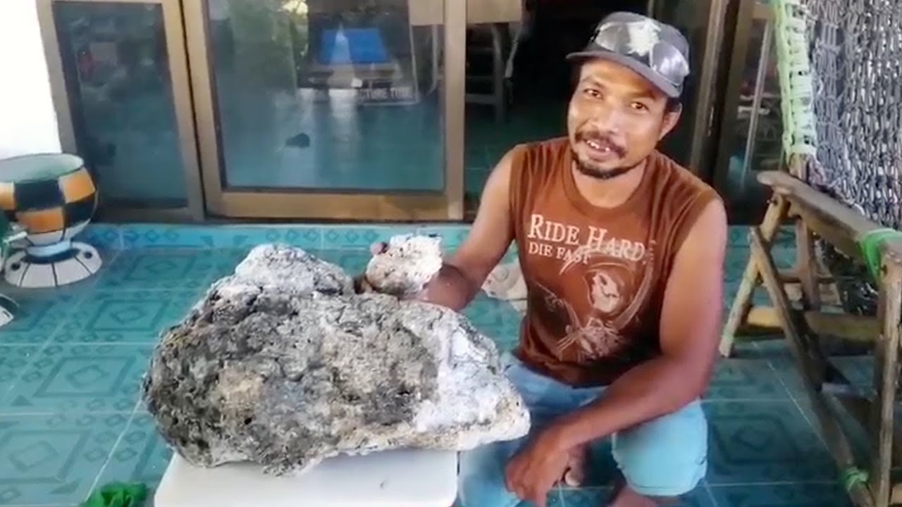 """Scavenger makes half-a-million pound find of """"whale vomit"""" – awaits government officers to assess"""
