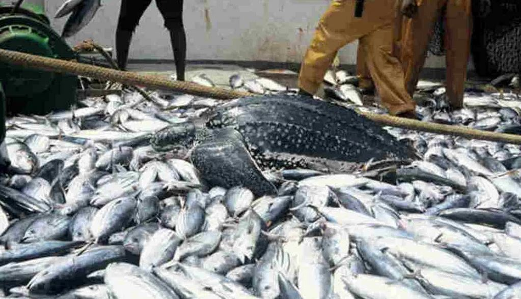 Seafarers call for probe of Agric Minister over death of aquatic creatures in Niger Delta