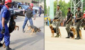 Police and Civil Defence Demand N310m to Feed Dogs, Horses Ahead of 2019 Elections