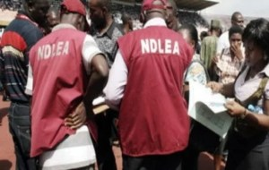 National Drug Law Enforcement Agency (NDLEA) Salary Structure in Nigeria