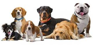 Dog Farming in Nigeria: Step by Step Guide
