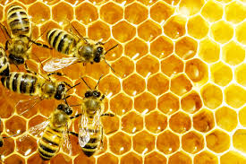 Bee Farming in Nigeria: Step by step guide