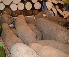 Yam Business in Nigeria: How to Get Started
