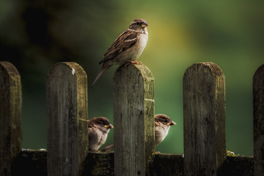 Image of three birds on a wooden fence for happy new month sms