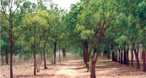 LASG Urges Residents To Plant More Trees