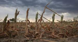 Stakeholders seek action towards Nigeria's climate adaptation