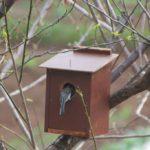D.I.Y 野鳥の巣箱作り