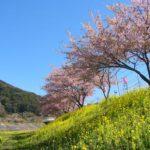 みなみの桜 2003<静岡県>