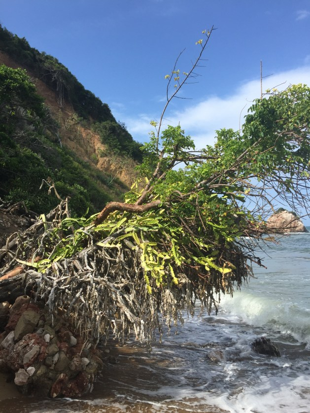 Coast near Cap-Haitien (c) ABR 2016