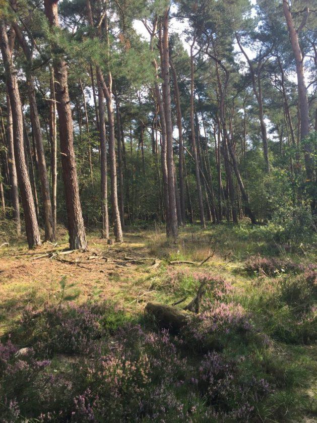 netherlands nature