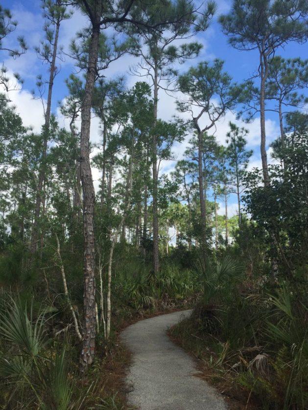 everglades hiking