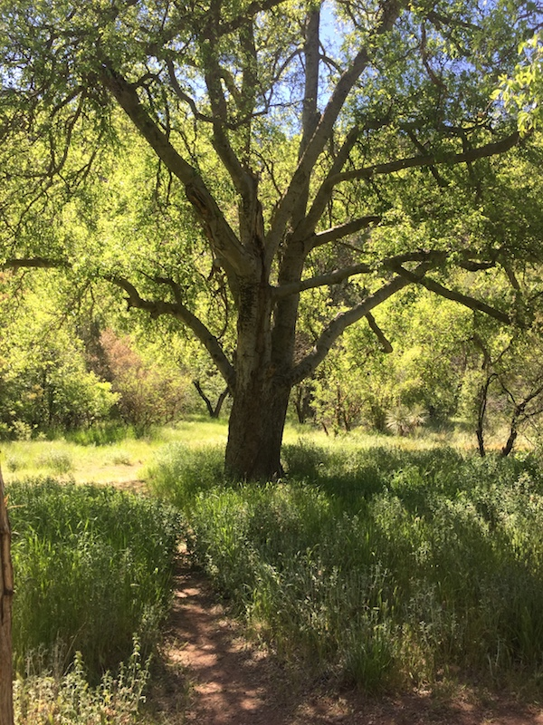 fossil springs trail