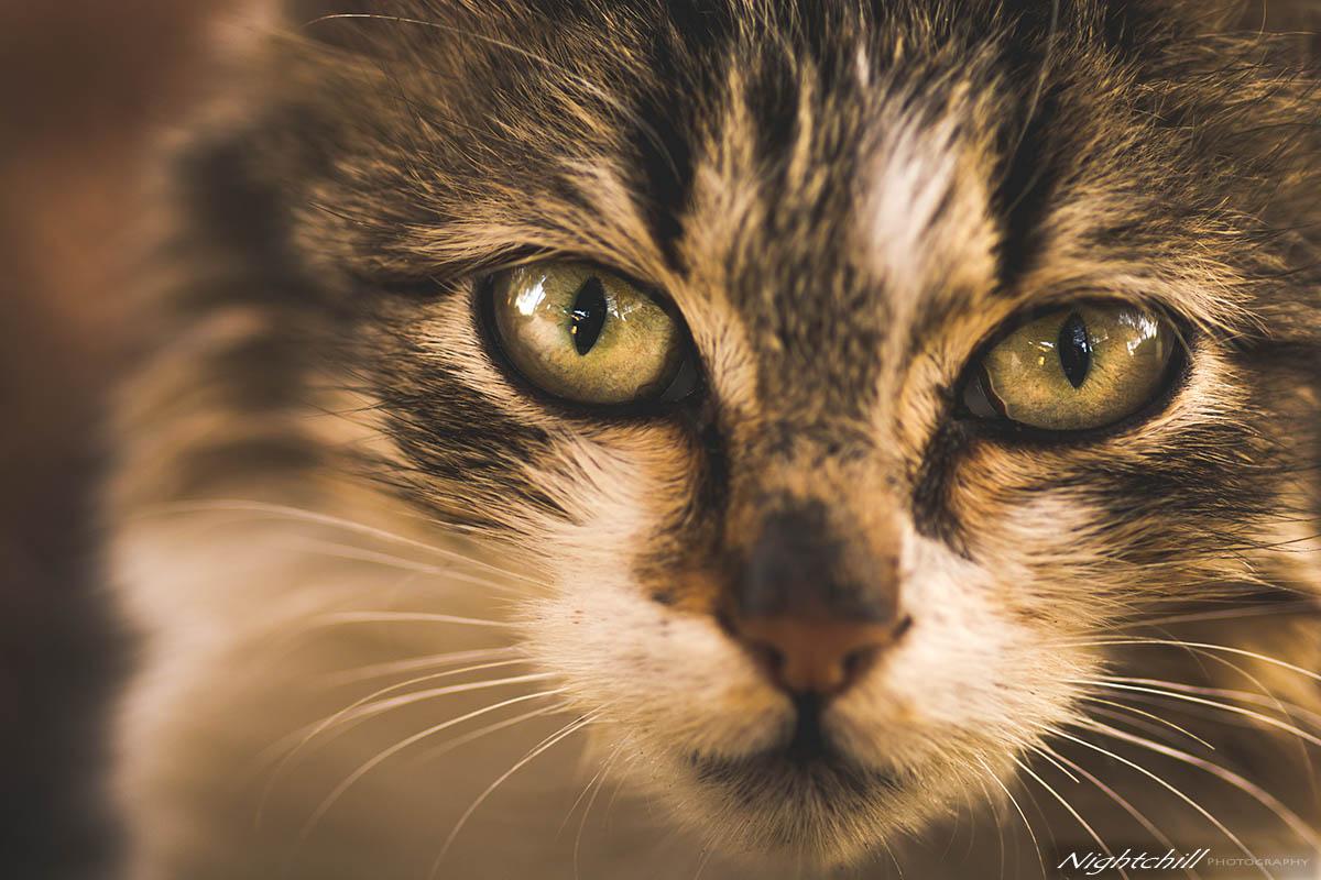 015 - Фотография на животни - Котка