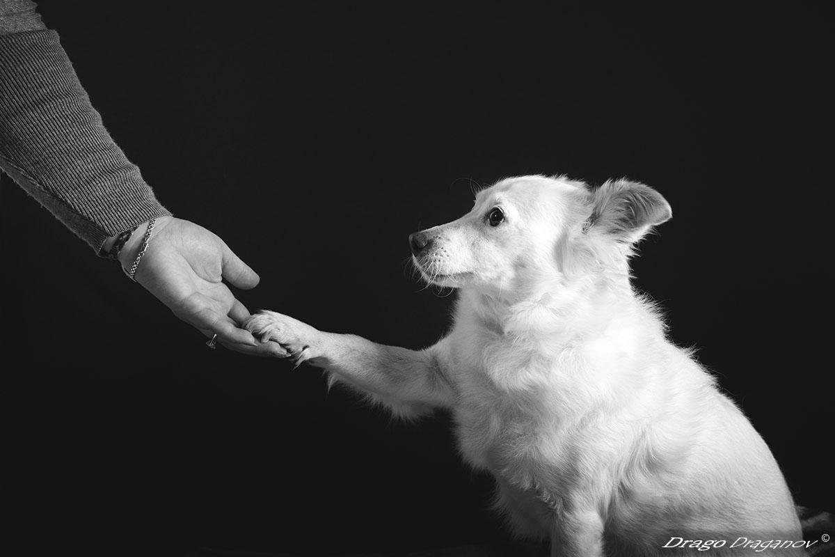фотограф на животни