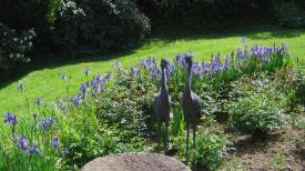 Siberian irises with fountain and cranes