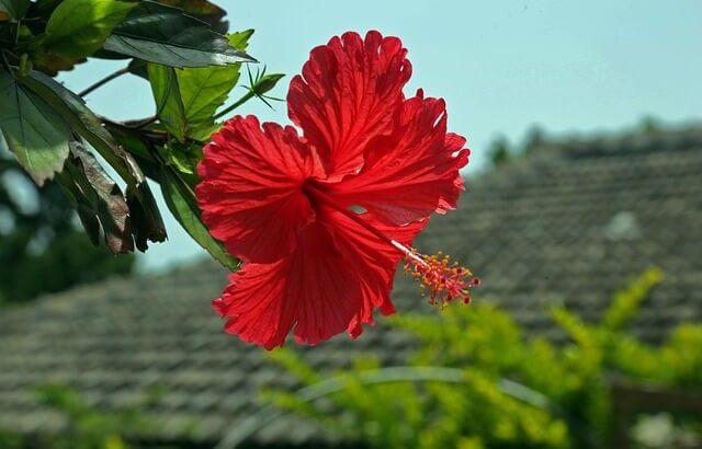 沖縄のおすすめラブホテル10選💖女子受け抜群の綺麗で安い、コスパ抜群ラブホとは?