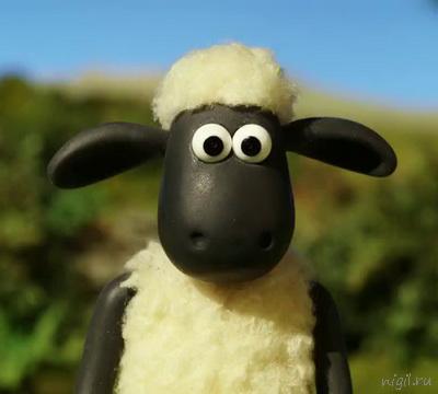 049 shaun the sheep