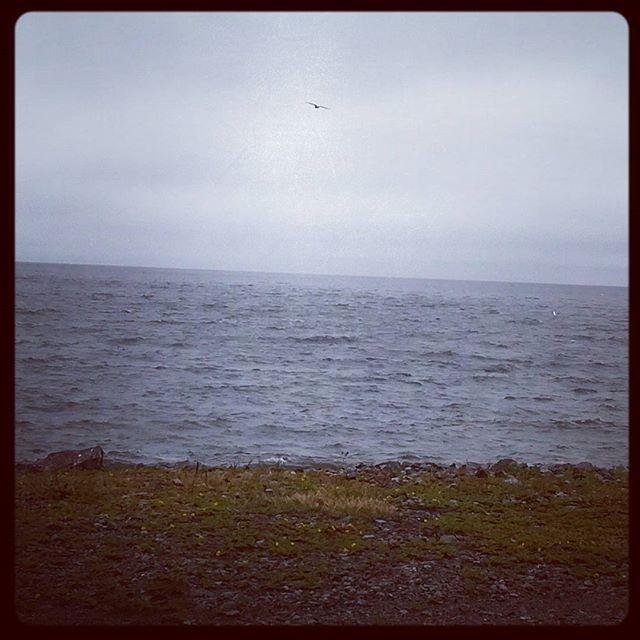 Почти лето, почти море и чайка #лето #море