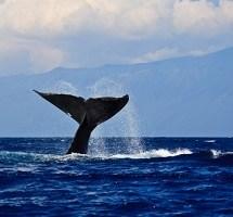 Walfangverbot in der Antarktis
