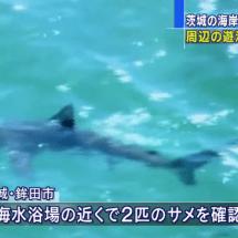 Hai Sichtung in Ibaraki fordert Schwimmverbot an den Stränden!