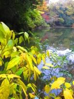 Autumn walk (19)