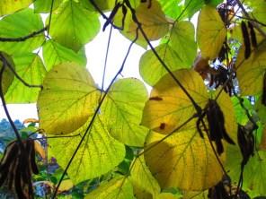 Autumn walk (20)