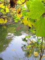 Autumn walk (21)