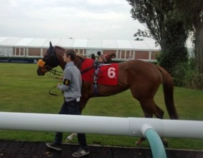 Flutter on the Gee Gees (4)